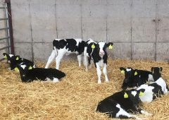 'The beginning is everything': Top tips to prepare for a smoother calving season