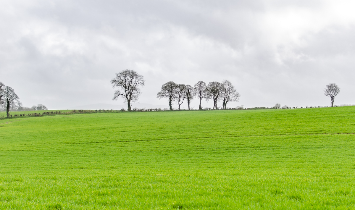 Mix of dry spells and wet conditions at start of 2020