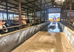 Feedlots: What are the views of the farm bodies?