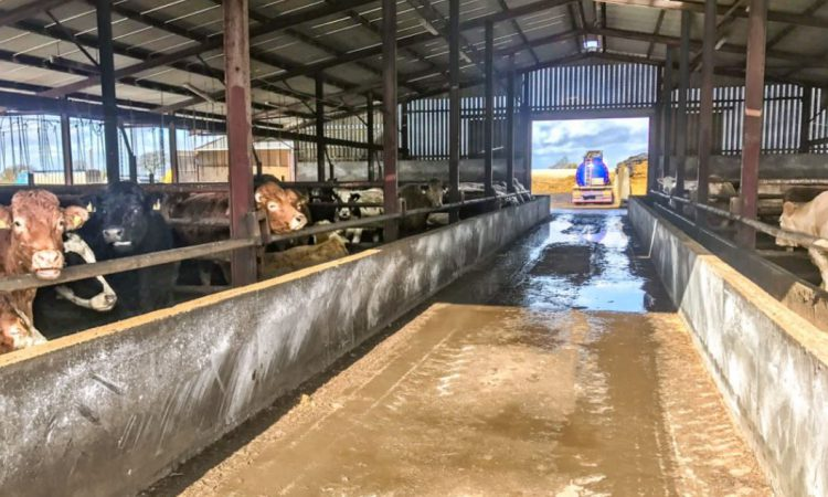 'Beef Plan' and MII clash over factory-owned feedlot operations