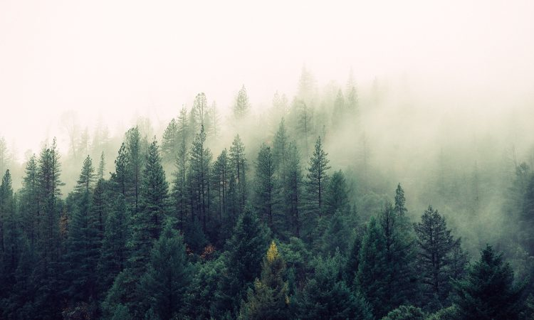 'Massive problems' in Ireland's Forest Service – Fitzmaurice