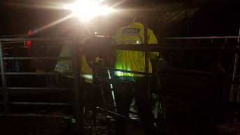 Joint emergency effort sees bullocks rescued from slurry pit