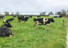 Dairy focus: Farming in a 'niche sector' in Co. Kildare