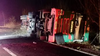 More than 200 sheep die in overturned lorry crash