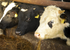 Exclusion of dairy farmers from BEAM 'discriminatory' – IFA