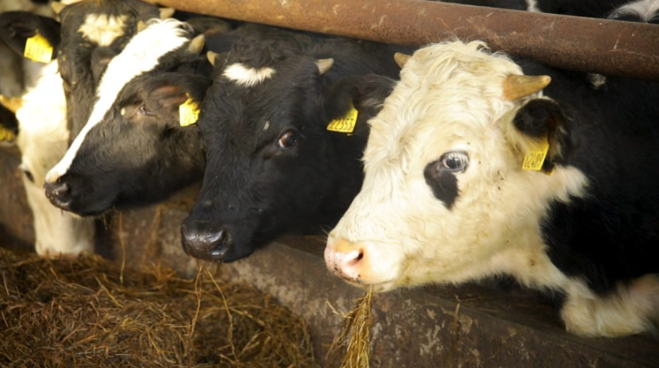 Exclusion of dairy farmers from BEAM 'sets a disastrous precedent'