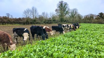 Top of the agenda in Co. Westmeath: Purchasing calves and focusing on grass