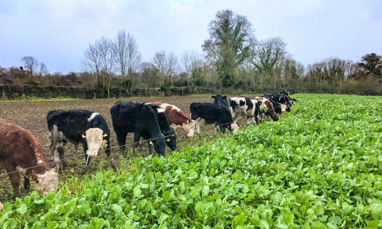 Planning ahead for cover and fodder crops