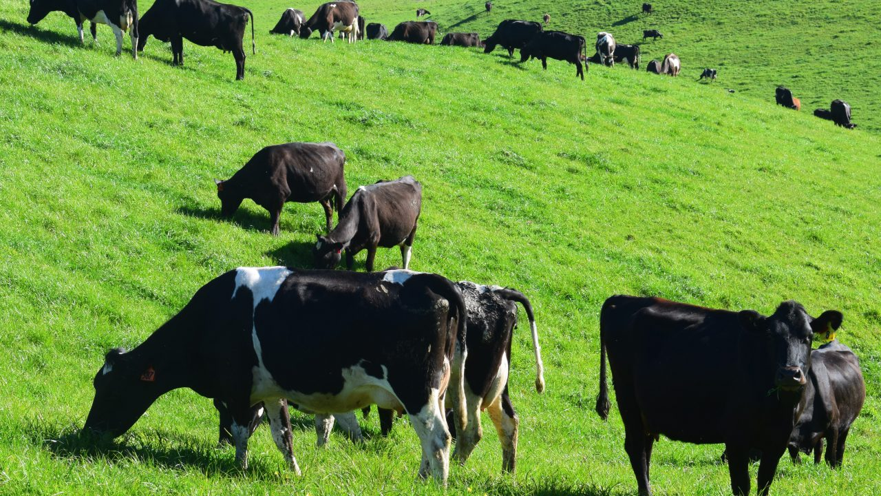 'Any attempt to exclude dairy farmers from beef fund will be rejected' – ICMSA