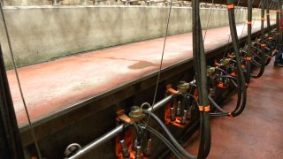 Aurivo and Arrabawn move to increase milk prices