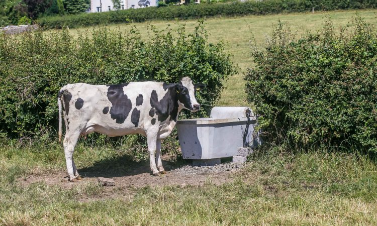 How Flogas helped this Co. Tipperary farmer have instant hot water any time of the year