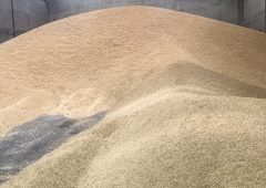 Government urged to 'consider embargo on Brazilian grain imports'