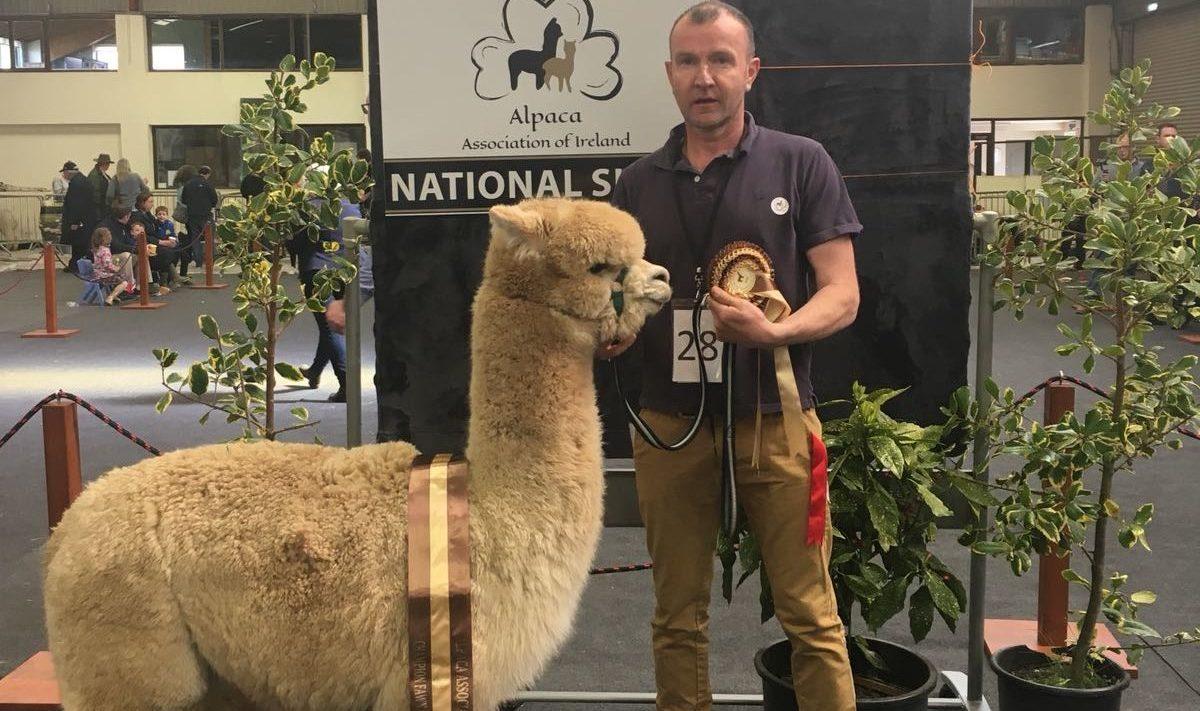 'Massive interest' as alpaca association hosts fleece show
