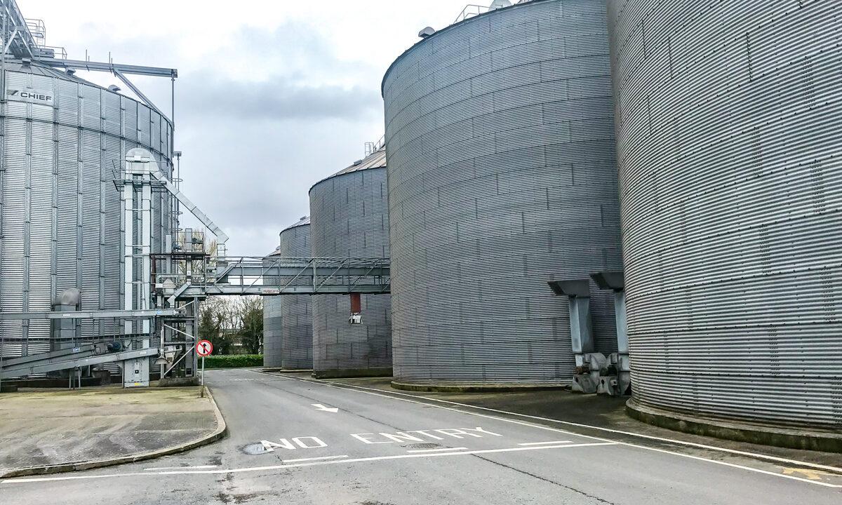 Boortmalt urges patience with green crops of barley