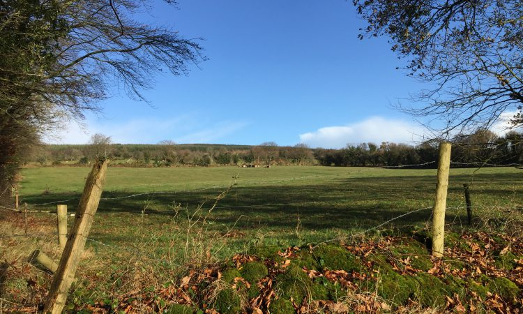 Fertile 47.5ac near Cahir offers investment potential