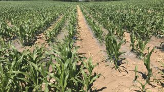 First forage maize crops of 2021 to be planted shortly