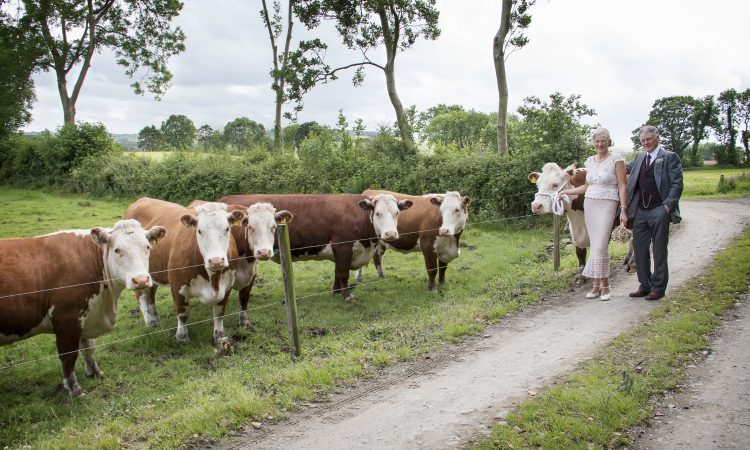 Is Millbawn Polly Ireland's oldest pedigree cow?