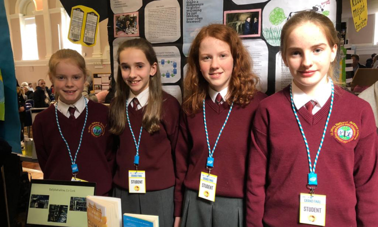 Clare pupils win Intel award for 'Cows, The Good, the Bad, and the Ugly' project