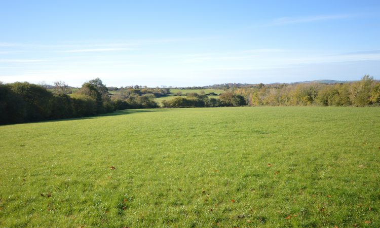 Land prices averaging €9,554 – SCSI/Teagasc report
