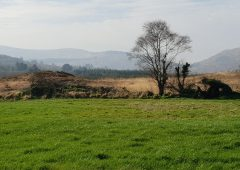 Co. Cork farm with mixed-quality land sees guide price of €2,725/ac