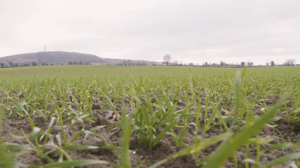 Post-emergence herbicide options on winter cereals