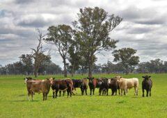 Tougher trespass laws urged after 100 Aussie activists 'invade' farm
