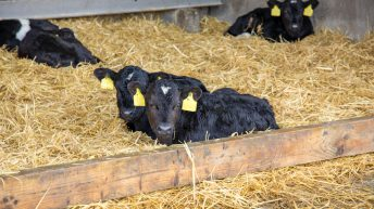 EU veal 'a long-term market we are well-positioned to supply'