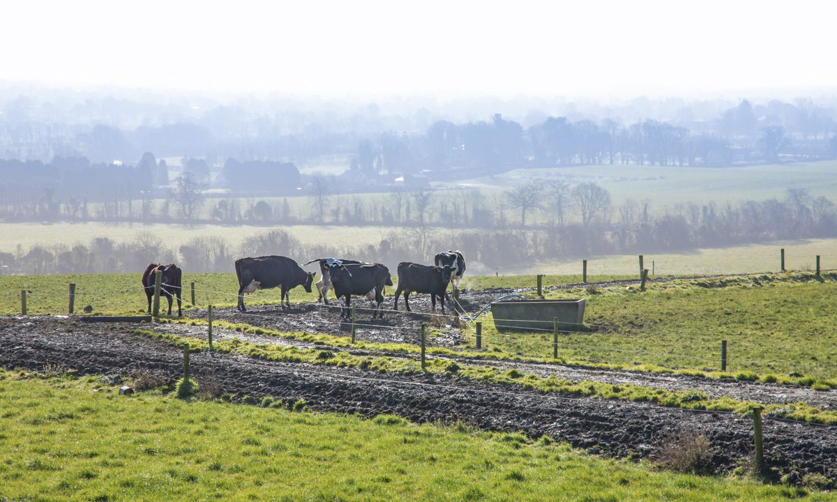 New Agri-Food Strategy 'a crucial moment' for agriculture