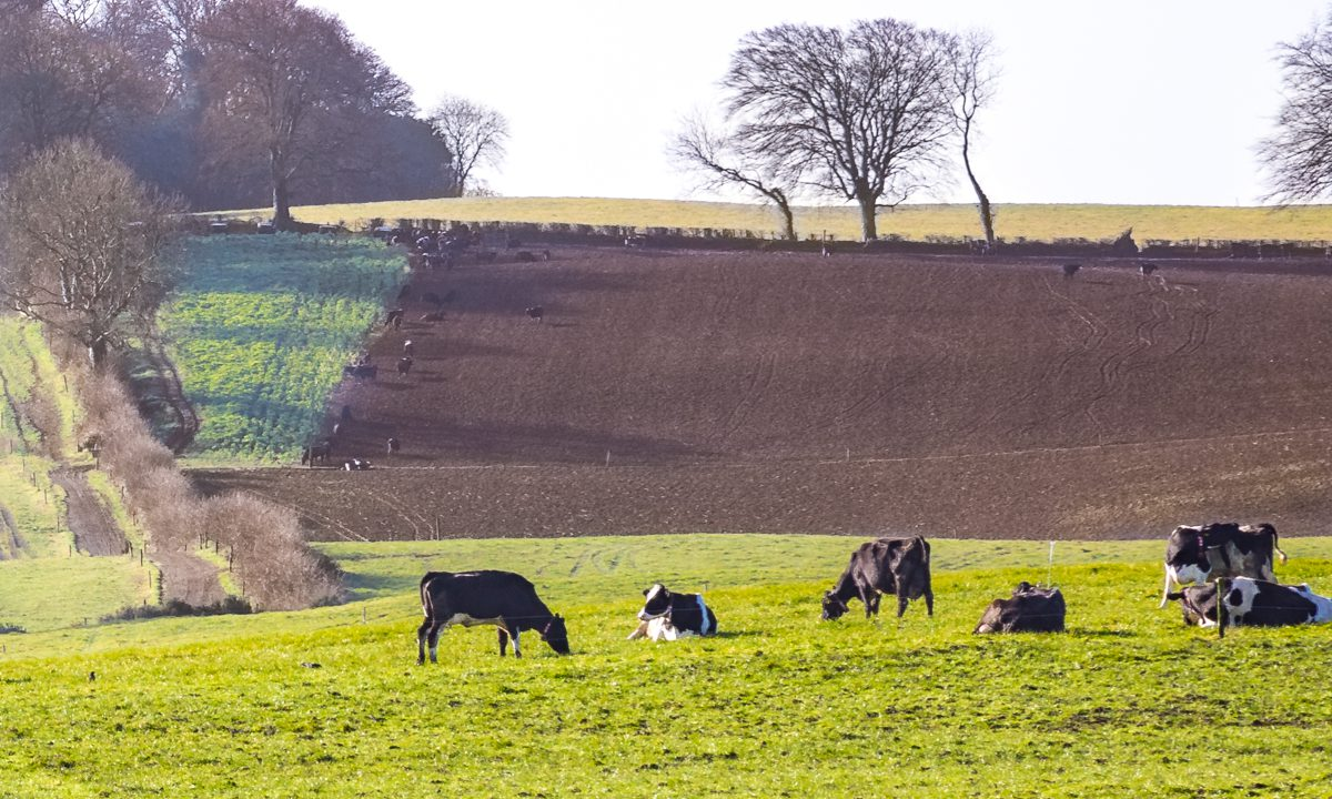 Agri-Food 2030: What climate measures are in store?