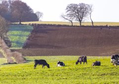 Reseeding: Abergain tops the PPI list