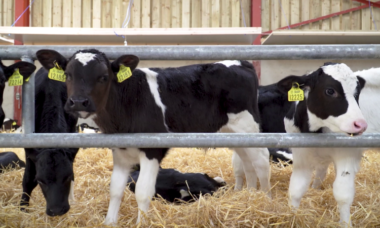 BVD eradication scheme supports to continue