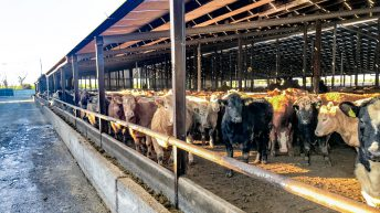 Department now publishing feedlot kill on monthly basis