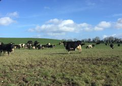 Dairy focus: Robots bring an 'easier way of life' in Co. Meath