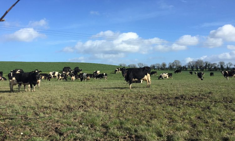 Grass advice: Autumn grazing made simple