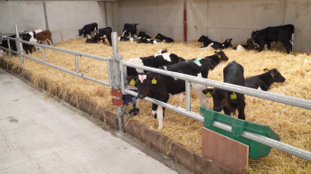 €1.5 million financial support scheme for calf rearing announced