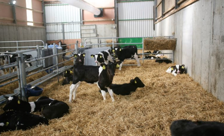 How can I prevent coccidiosis in the calf house?