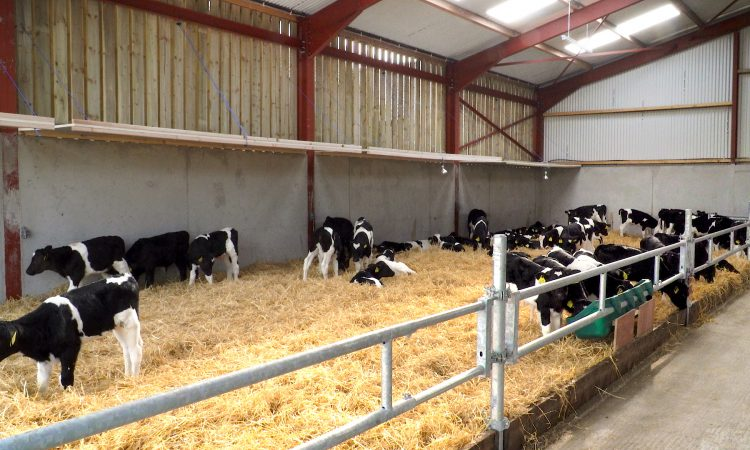 Providing the perfect environment for calves in Co. Kilkenny