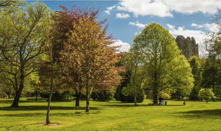 'Plant for our Planet': Public urged to back National Tree Week 2019