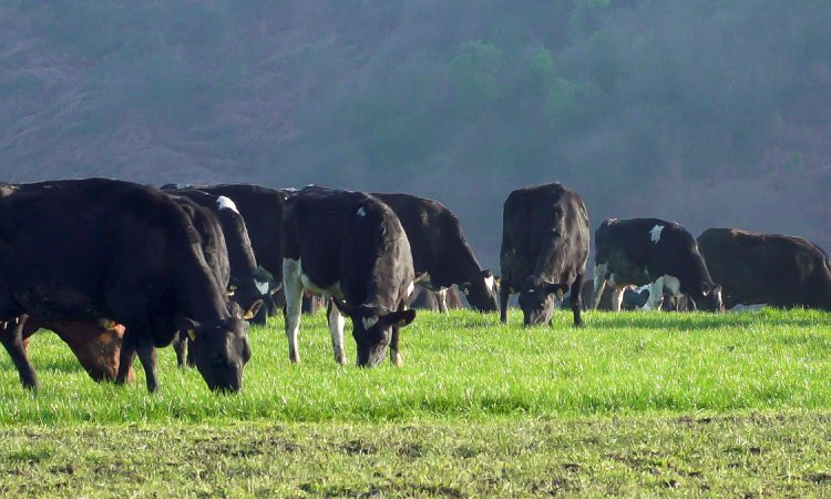Changes to draft TB regulations 'to the benefit of farmers' – Creed