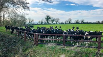 Meet the newly-appointed Teagasc Green Acres Calf to Beef advisors