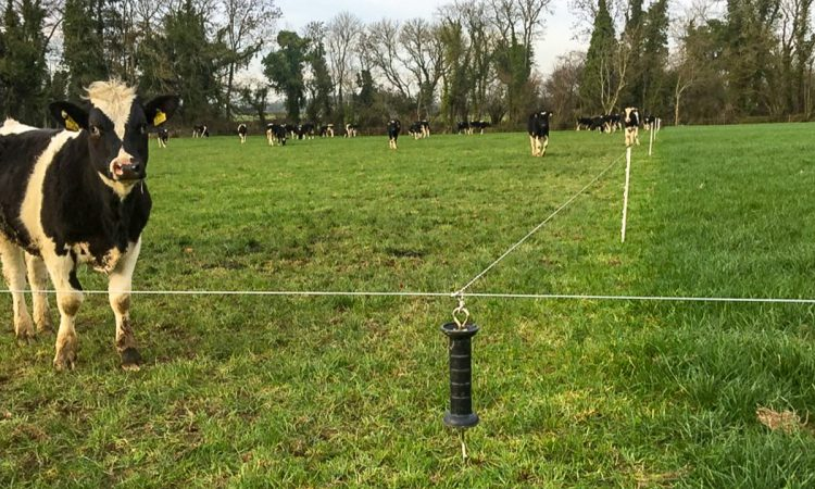 Grazing conditions excellent and all yearlings out in Co. Meath