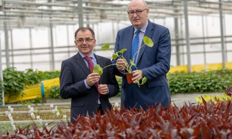 Hogan visits Beotanics – the company bringing sweet potatoes from Kilkenny to the world