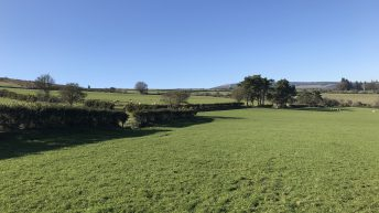 81ac Aughrim farm comes with outbuildings and hill rights