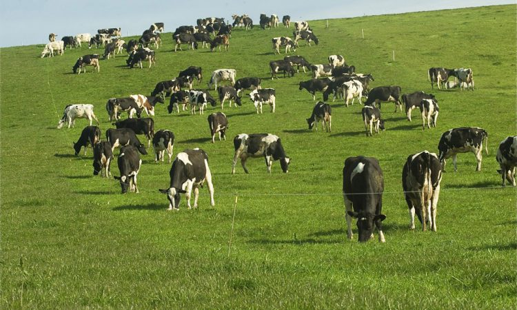Dairy cow numbers up 3.4% while other cow numbers drop by 3.1%