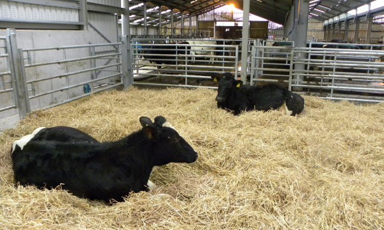 Why is having a compact calving pattern so important?