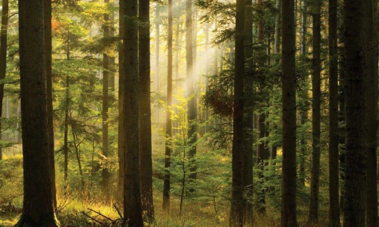 €15.4 million further payment of forest premiums announced