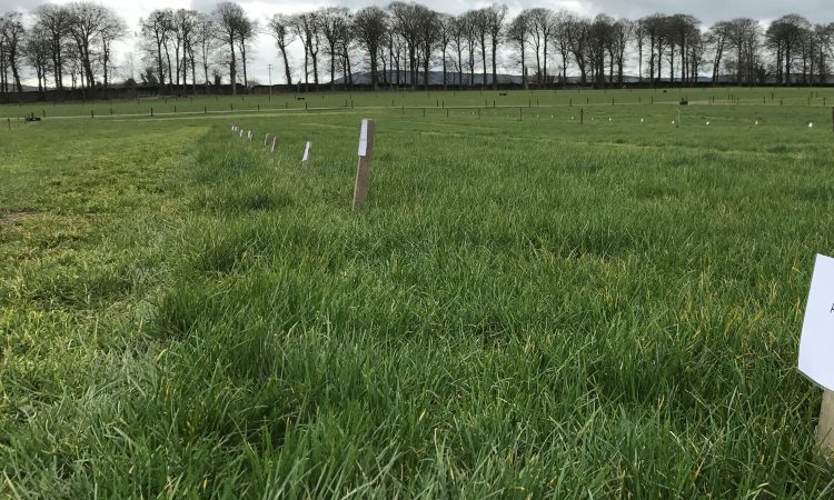 Giving grass swards 'Energy' for the season ahead