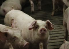 Covid-19 impact on pig sector 'very worrying'
