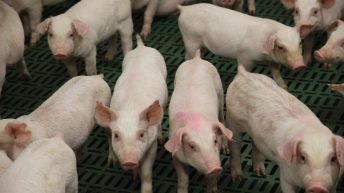 Teagasc pig conference comes to Cavan tomorrow