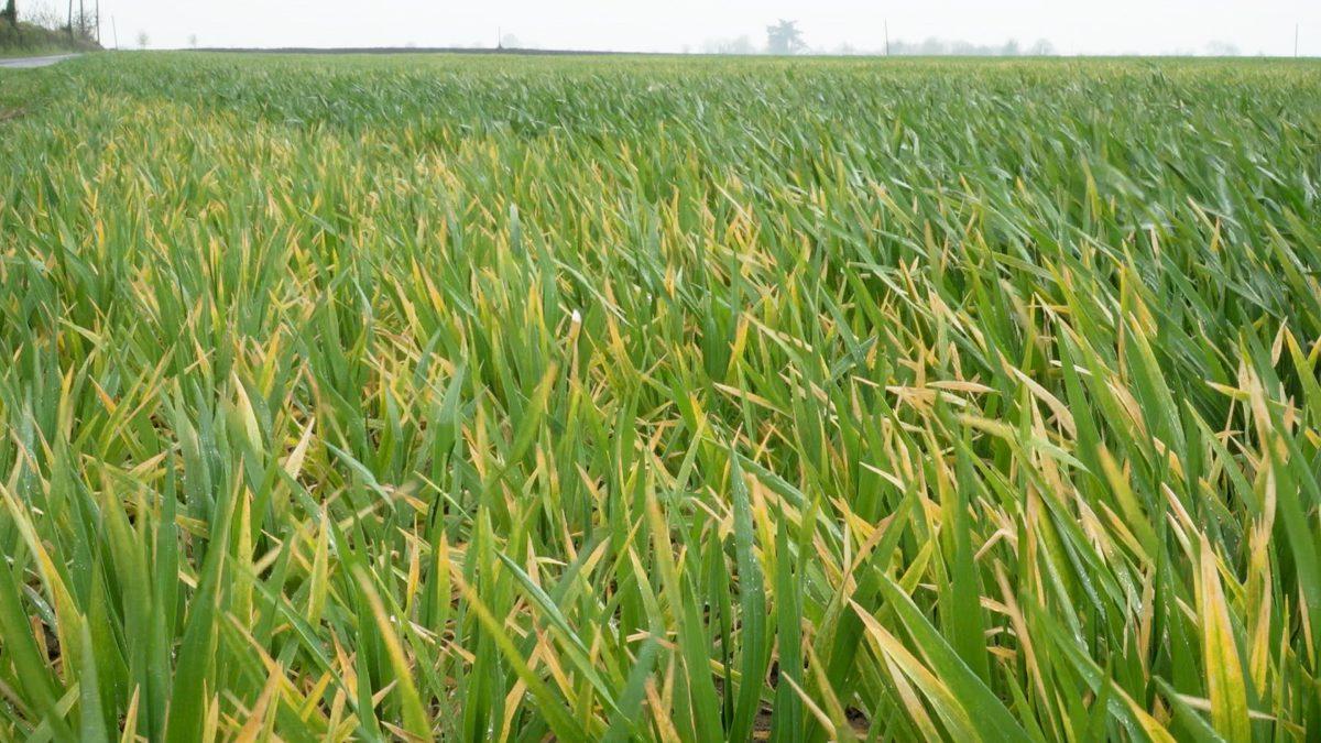 IFA welcomes Creed decision to seek 3-crop derogation